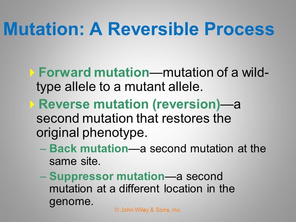 Phenotype is not suppressed Phenotype is restored