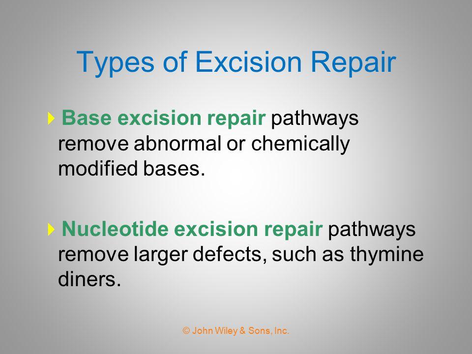 Base Excision Repair © John Wiley & Sons, Inc. AP:apyrimidinic site