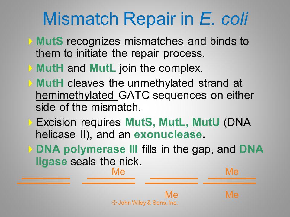 Post-replication Repair in E.
