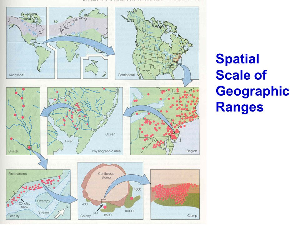 Variations in Geographic Range size Within a taxonomic group, most species have a small geographic range: