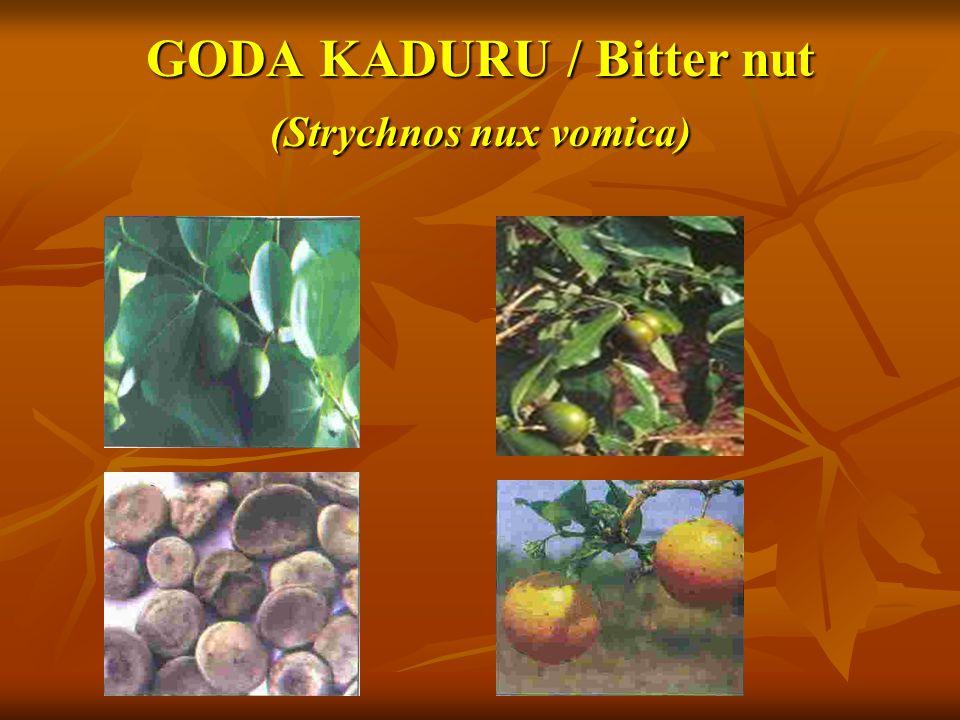 GODA KADURU / Bitter nut (Strychnos nux vomica)
