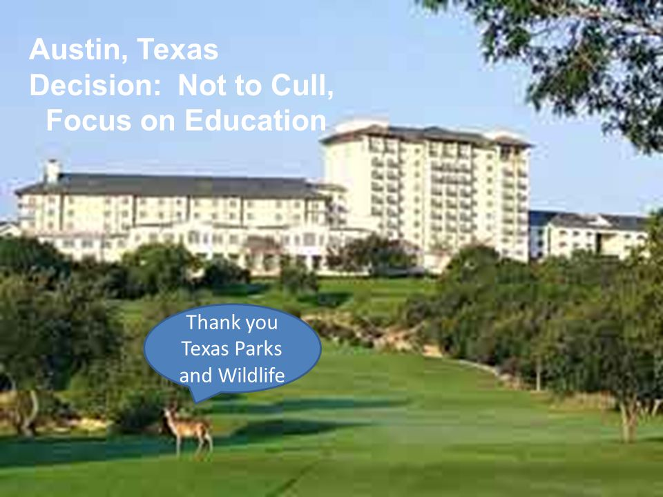 Austin, Texas Decision: Not to Cull, Focus on Education Thank you Texas Parks and Wildlife