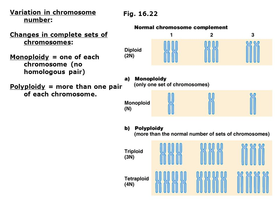 Fig. 16.22 Variation in chromosome number: Changes in complete sets of chromosomes: Monoploidy = one of each chromosome (no homologous pair) Polyploid