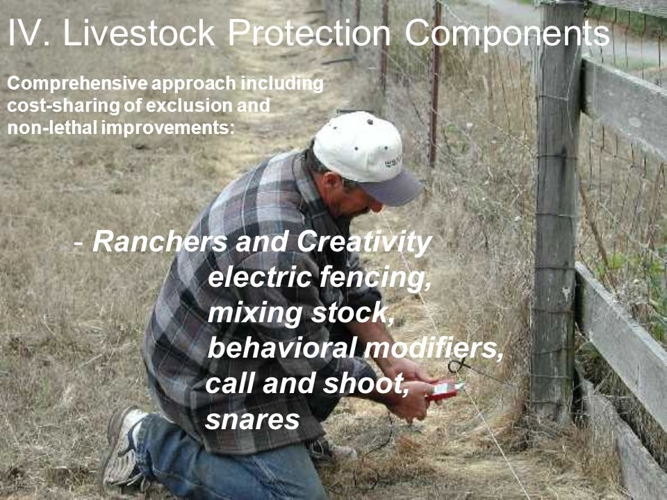 IV. Livestock Protection Components Comprehensive approach including cost-sharing of exclusion and non-lethal improvements: - Ranchers and Creativity