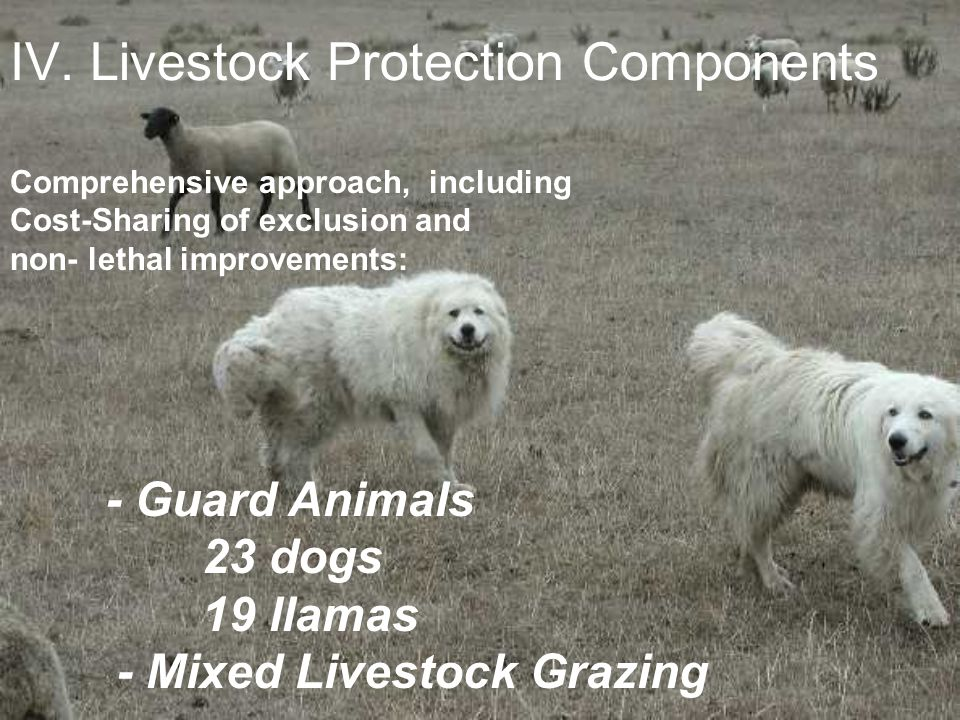 IV. Livestock Protection Components Comprehensive approach, including Cost-Sharing of exclusion and non- lethal improvements: - Guard Animals 23 dogs