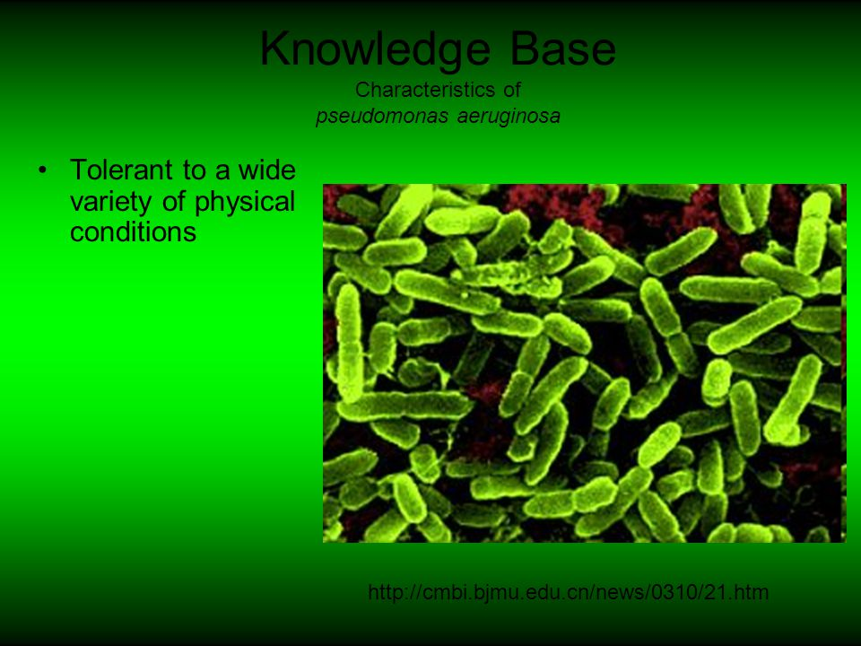 Knowledge Base Innate immunity is activated when microorganisms succeed in entering the body cavity of the fly.