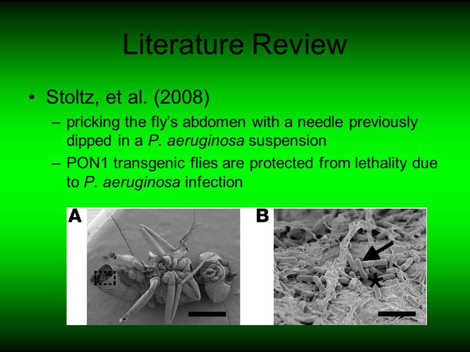 Literature Review D'Argenio, et al (2000) –PAO1, the best-characterized strain of P.