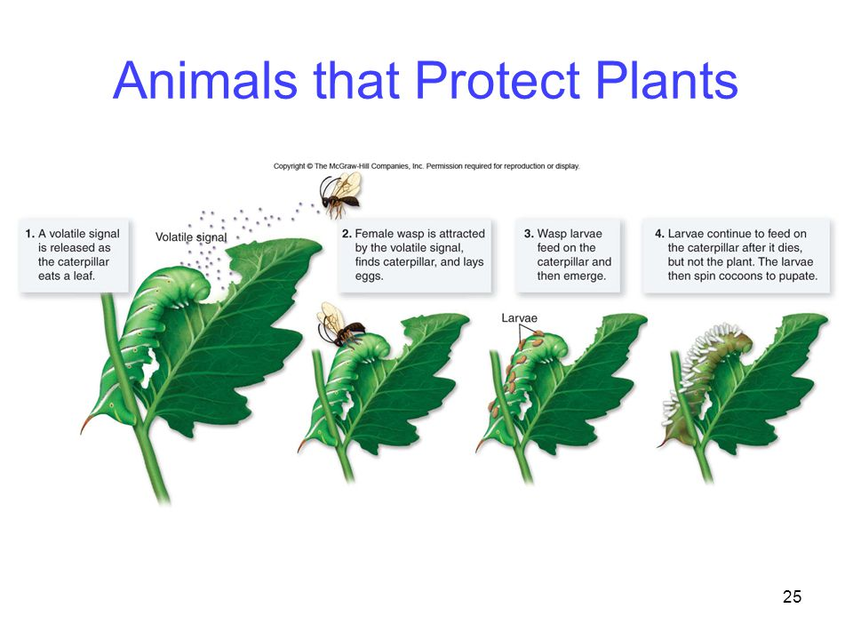 25 Animals that Protect Plants
