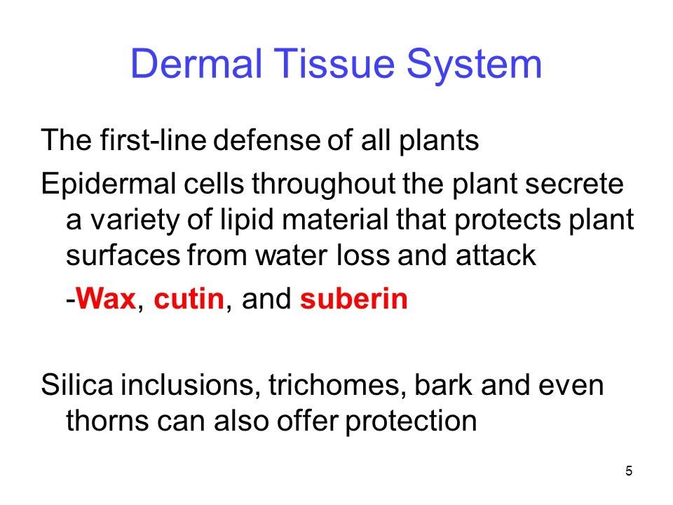 16 Toxin Defenses Allelopathic plants secrete chemicals to block seed germination or inhibit growth of nearby plants -This strategy minimizes competition for resources -Very little vegetation grows under a black walnut tree