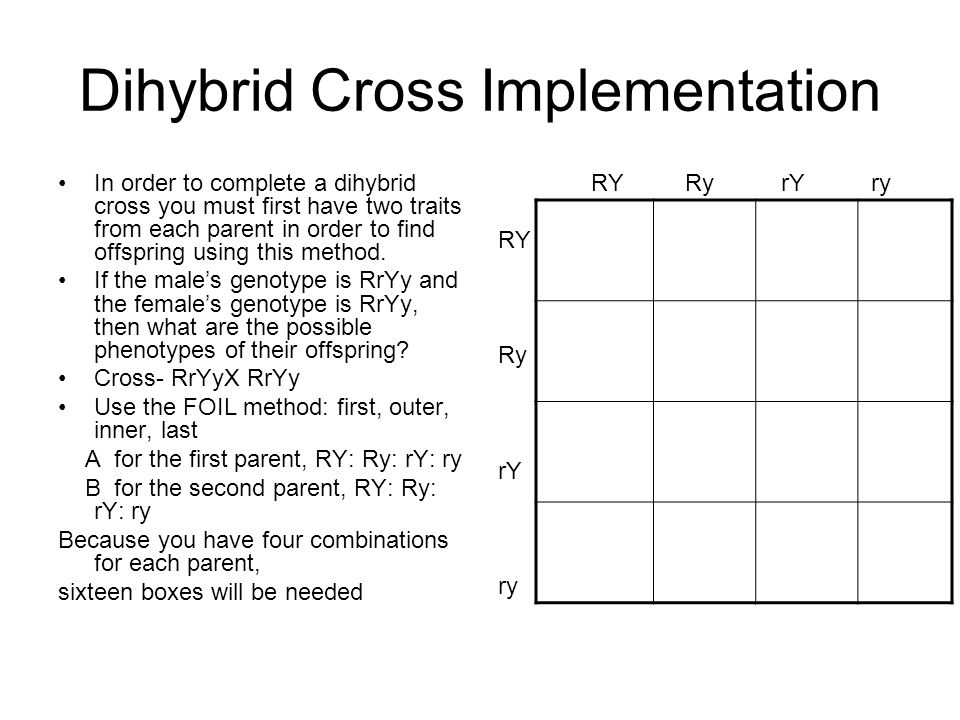 Dihybrid Cross Implementation In order to complete a dihybrid cross you must first have two traits from each parent in order to find offspring using t