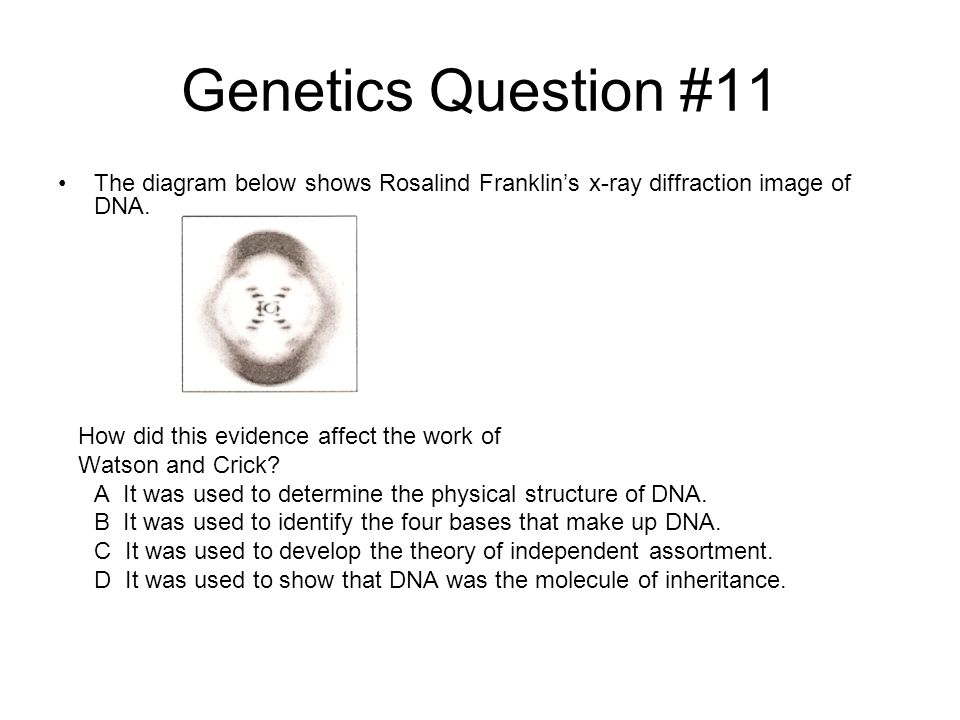 Genetics Question #11 The diagram below shows Rosalind Franklin's x-ray diffraction image of DNA. How did this evidence affect the work of Watson and