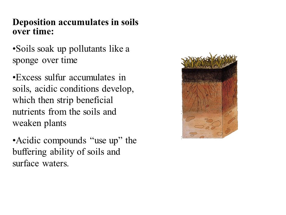 Deposition accumulates in soils over time: Soils soak up pollutants like a sponge over time Excess sulfur accumulates in soils, acidic conditions develop, which then strip beneficial nutrients from the soils and weaken plants Acidic compounds use up the buffering ability of soils and surface waters.