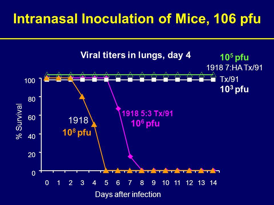 Intranasal Inoculation of Mice, 106 pfu 0 20 40 60 80 100 01234567891011121314 % Survival Days after infection Tx/91 1918 5:3 Tx/91 1918 1918 7:HA Tx/91 Viral titers in lungs, day 4 10 3 pfu 10 6 pfu 10 8 pfu 10 5 pfu