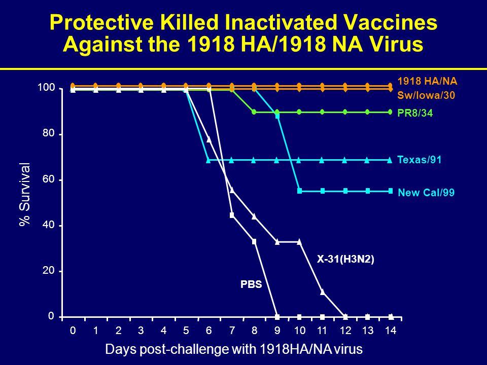 New Cal/99 PR8/34 Texas/91 Sw/Iowa/30 Protective Killed Inactivated Vaccines Against the 1918 HA/1918 NA Virus 0 20 40 60 80 100 01234567891011121314 % Survival PBS Days post-challenge with 1918HA/NA virus X-31(H3N2) 1918 HA/NA