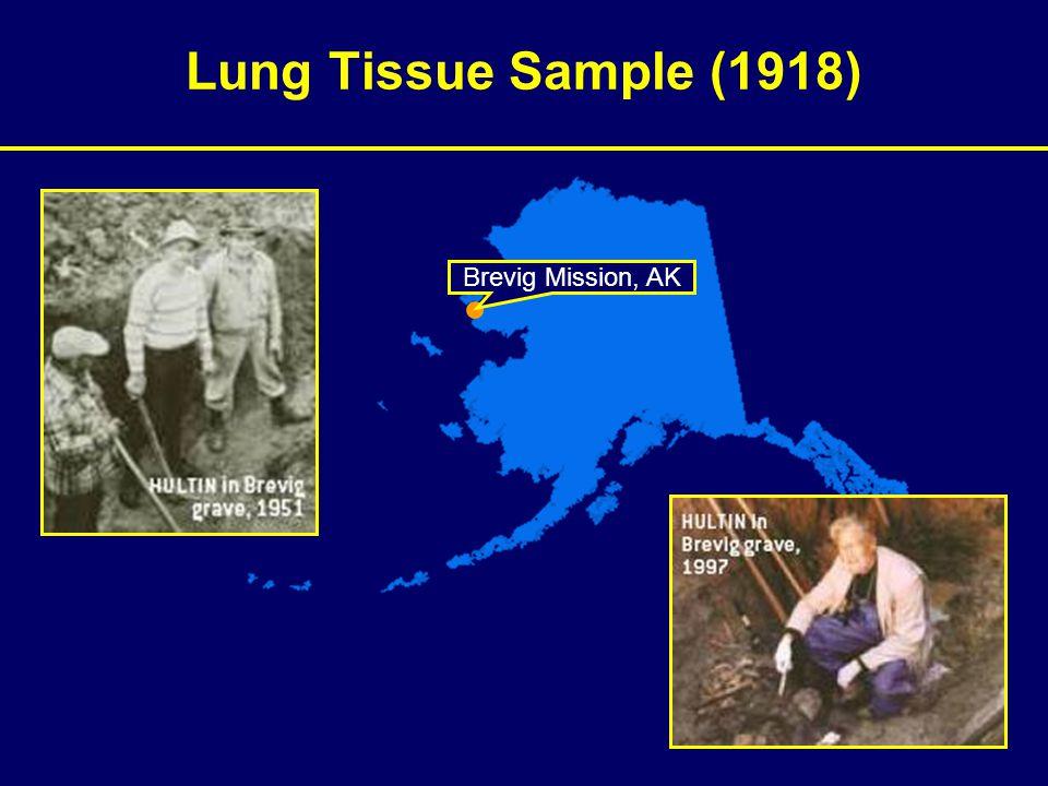 Lung Tissue Sample (1918) Brevig Mission, AK