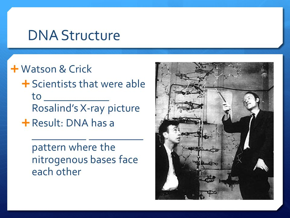 DNA Structure  Watson & Crick  Scientists that were able to ____________ Rosalind's X-ray picture  Result: DNA has a __________ __________ pattern where the nitrogenous bases face each other