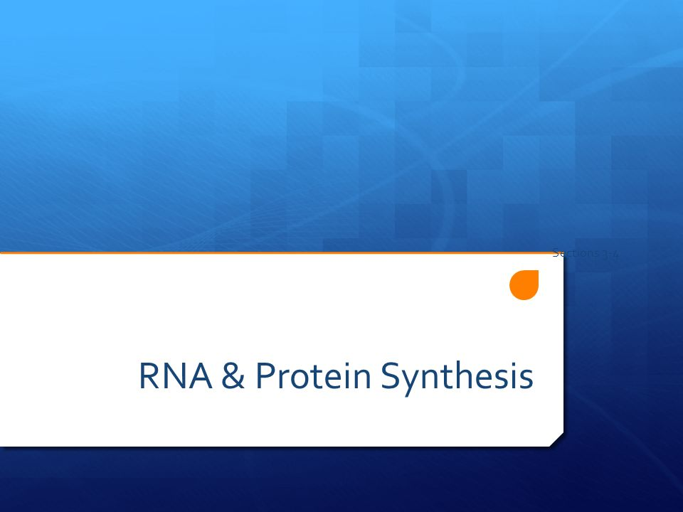 RNA & Protein Synthesis Sections 3-4