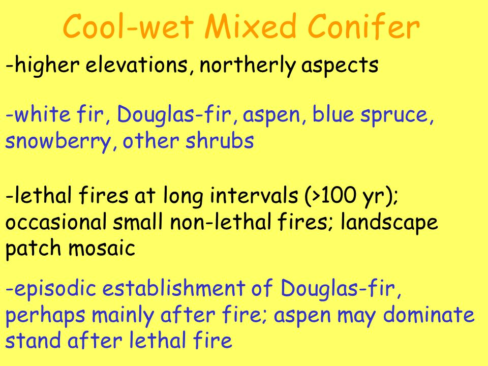 Cool-wet Mixed Conifer -higher elevations, northerly aspects -white fir, Douglas-fir, aspen, blue spruce, snowberry, other shrubs -lethal fires at long intervals (>100 yr); occasional small non-lethal fires; landscape patch mosaic -episodic establishment of Douglas-fir, perhaps mainly after fire; aspen may dominate stand after lethal fire