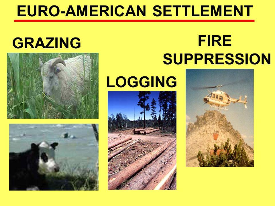 EURO-AMERICAN SETTLEMENT GRAZING LOGGING FIRE SUPPRESSION