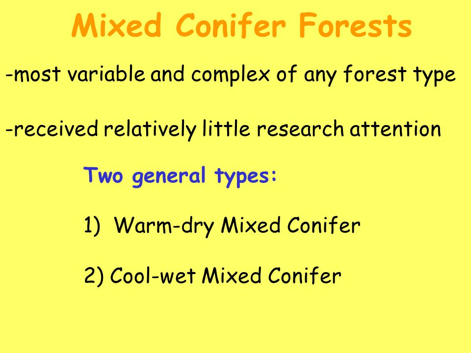 -most variable and complex of any forest type Mixed Conifer Forests Two general types: 1) Warm-dry Mixed Conifer 2) Cool-wet Mixed Conifer -received relatively little research attention