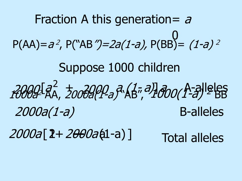 P(AA)=a 2, P( AB )=2a(1-a), P(BB)= (1-a) 2 Suppose 1000 children 1000a 2 AA, 2000a(1-a) AB , BB Fraction A this generation= a 2000 +aa(1- ) 2 A-alleles[]aa Total alleles 1000(1-a) 2 2000a(1-a) B-alleles 2000a +(1-a)[]12a 0 —
