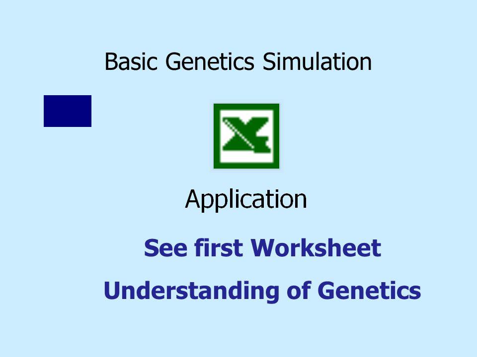 Basic Genetics Simulation See first Worksheet Understanding of Genetics