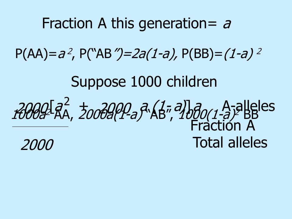P(AA)=a 2, P( AB )=2a(1-a), P(BB)=(1-a) 2 Suppose 1000 children 1000a 2 AA, 2000a(1-a) AB , 1000(1-a) 2 BB Fraction A this generation= a 2000 +aa(1- ) 2 A-alleles[]aa Total alleles 2000 Fraction A