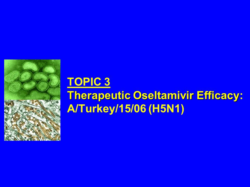 Therapeutic Oseltamivir Efficacy TOPIC 3 Therapeutic Oseltamivir Efficacy: A/Turkey/15/06 (H5N1)