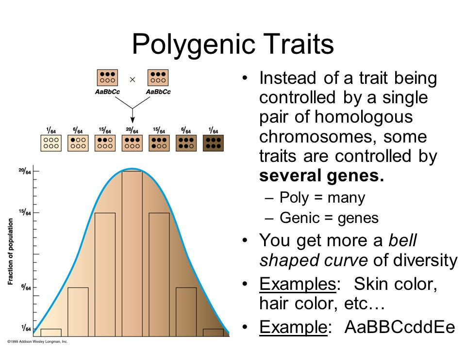 Polygenic Traits Instead of a trait being controlled by a single pair of homologous chromosomes, some traits are controlled by several genes. –Poly =
