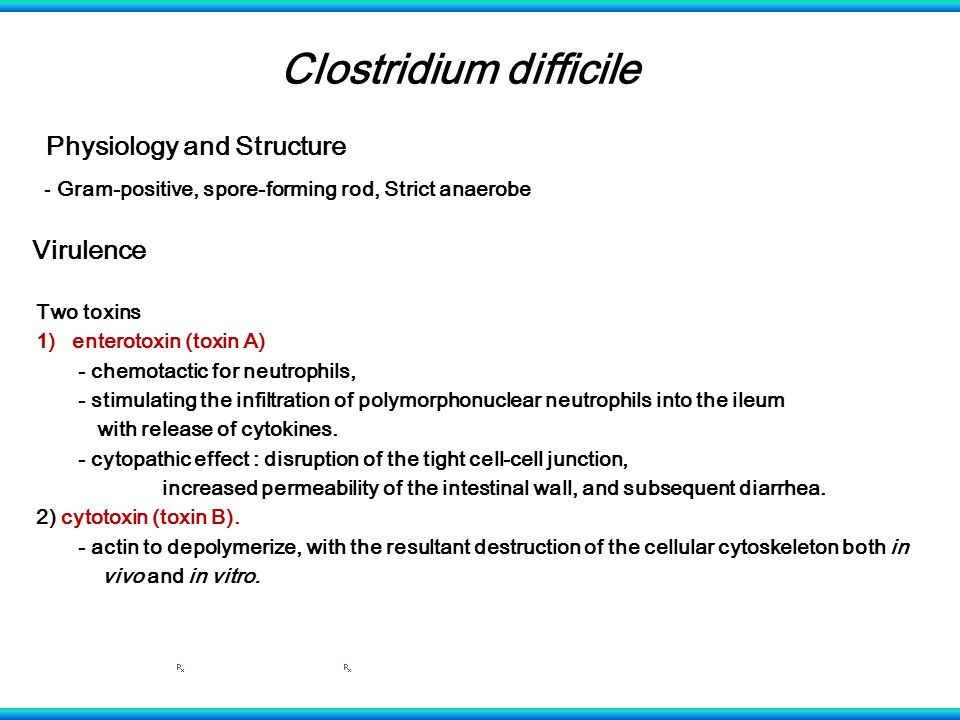 Clostridium difficile Physiology and Structure - Gram-positive, spore-forming rod, Strict anaerobe Virulence Two toxins 1)enterotoxin (toxin A) - chemotactic for neutrophils, - stimulating the infiltration of polymorphonuclear neutrophils into the ileum with release of cytokines.