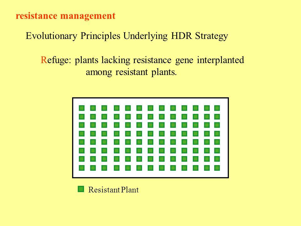 resistance management Evolutionary Principles Underlying HDR Strategy Refuge: plants lacking resistance gene interplanted among resistant plants.