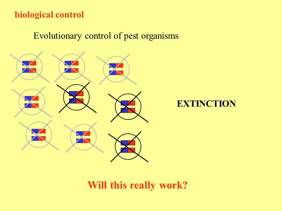 biological control Evolutionary control of pest organisms EXTINCTION Will this really work?