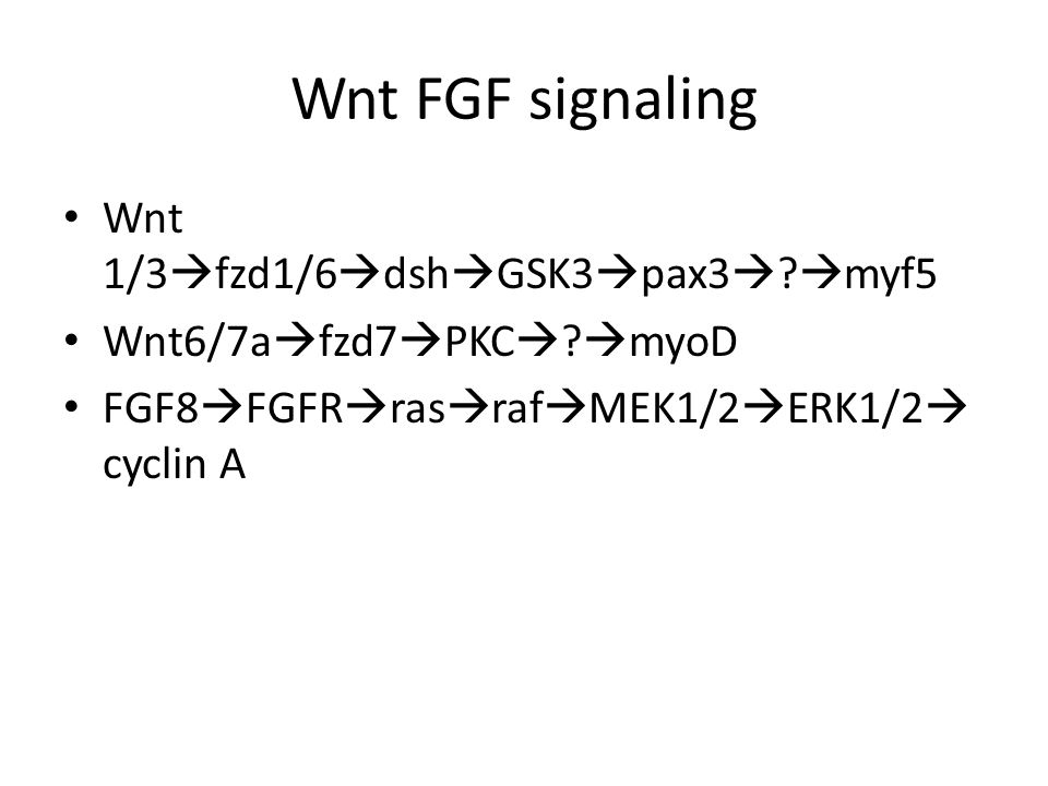 Wnt FGF signaling Wnt 1/3  fzd1/6  dsh  GSK3  pax3  .