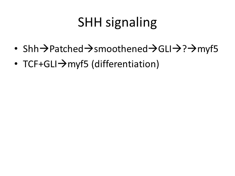 SHH signaling Shh  Patched  smoothened  GLI   myf5 TCF+GLI  myf5 (differentiation)