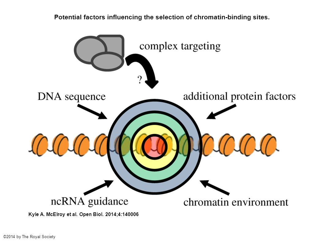 Potential factors influencing the selection of chromatin-binding sites. Kyle A. McElroy et al. Open Biol. 2014;4:140006 ©2014 by The Royal Society