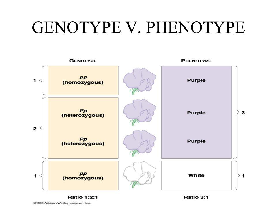 GENOTYPE V. PHENOTYPE