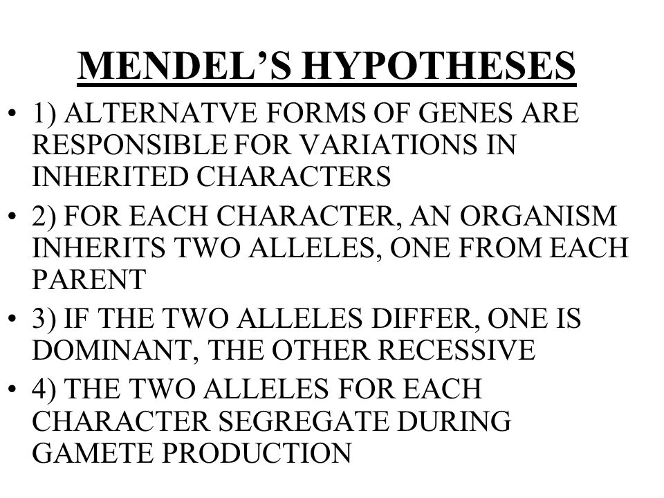 MENDEL'S HYPOTHESES 1) ALTERNATVE FORMS OF GENES ARE RESPONSIBLE FOR VARIATIONS IN INHERITED CHARACTERS 2) FOR EACH CHARACTER, AN ORGANISM INHERITS TWO ALLELES, ONE FROM EACH PARENT 3) IF THE TWO ALLELES DIFFER, ONE IS DOMINANT, THE OTHER RECESSIVE 4) THE TWO ALLELES FOR EACH CHARACTER SEGREGATE DURING GAMETE PRODUCTION