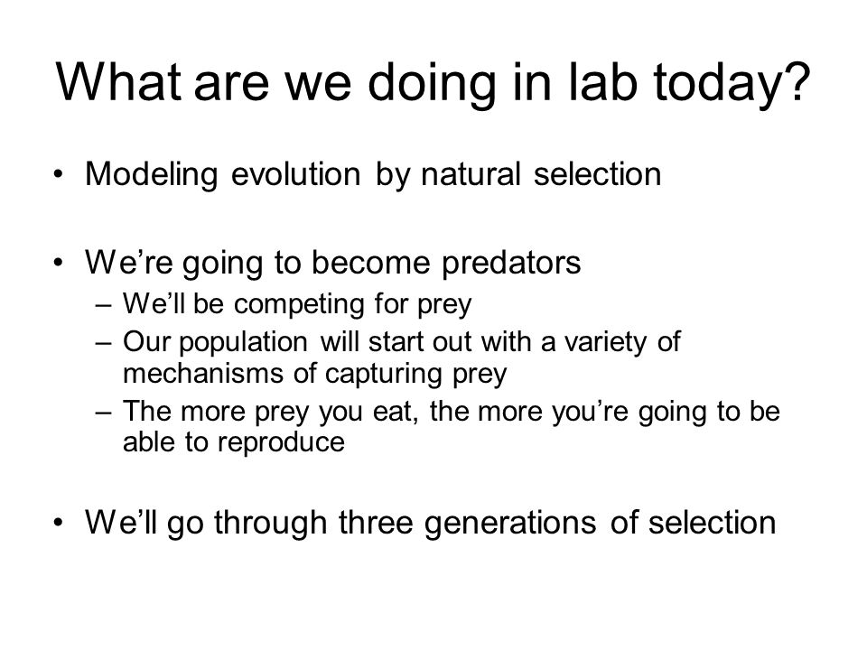 What are we doing in lab today.