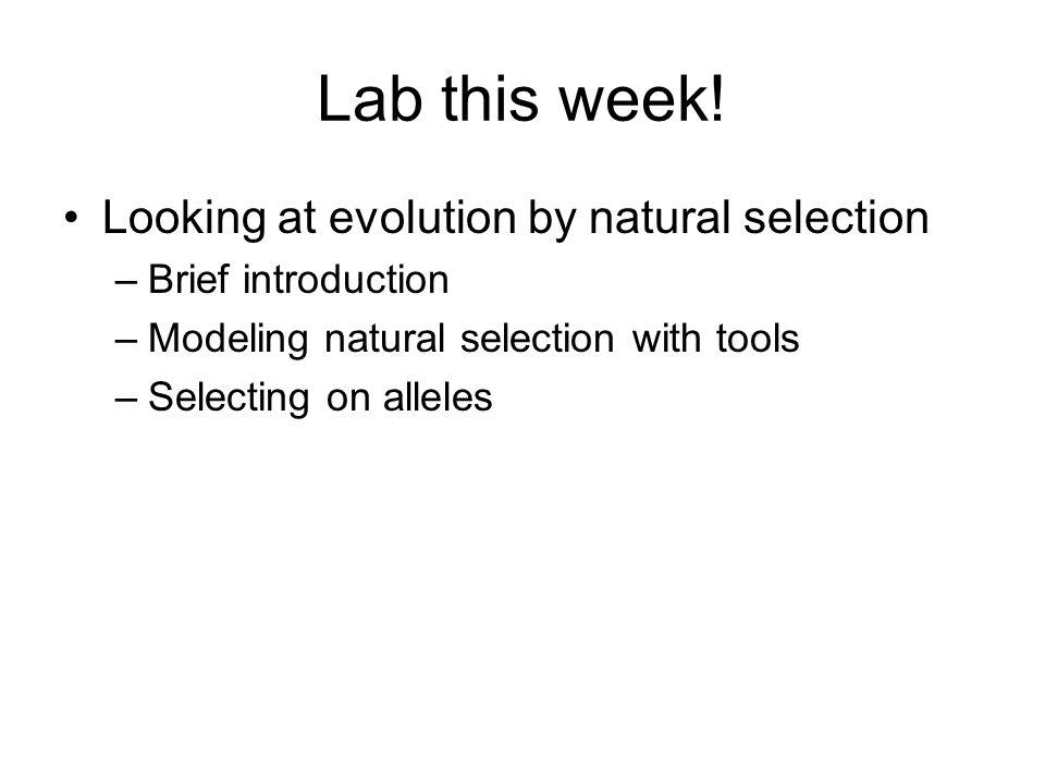 Lab this week.