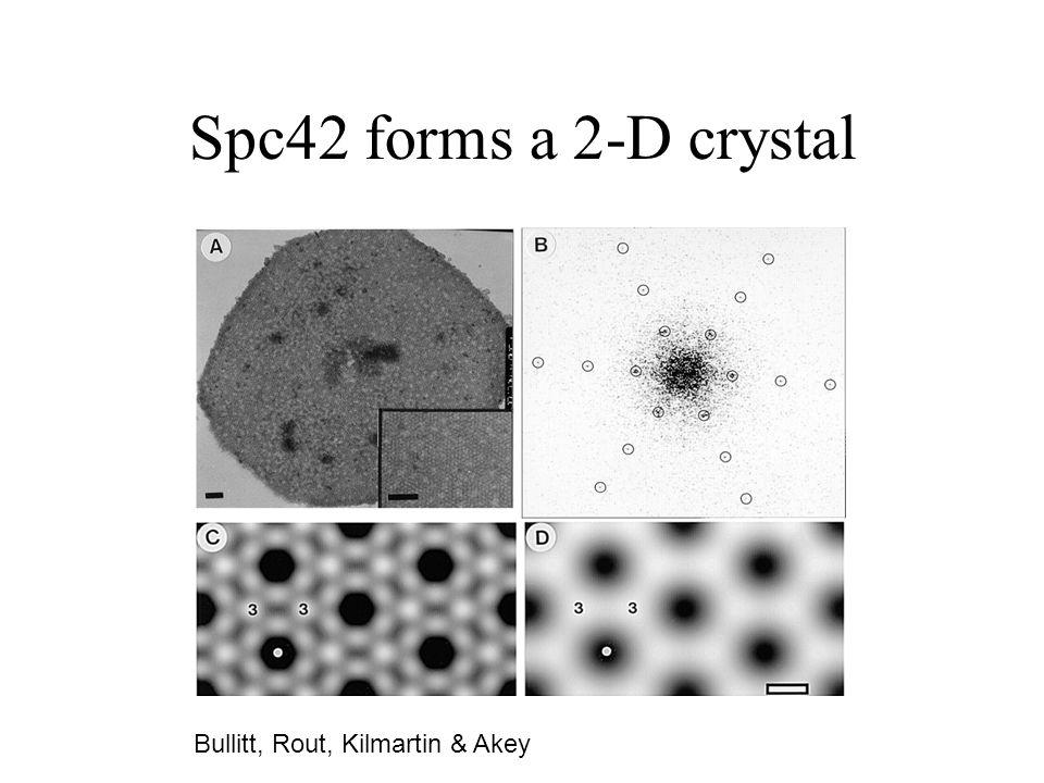 Spc42 forms a 2-D crystal Bullitt, Rout, Kilmartin & Akey