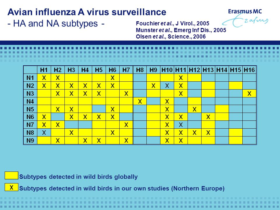 Avian influenza A virus surveillance - HA and NA subtypes - Subtypes detected in wild birds globally Subtypes detected in wild birds in our own studie