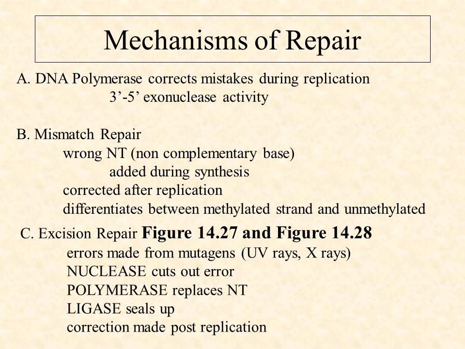 Mechanisms of Repair A.