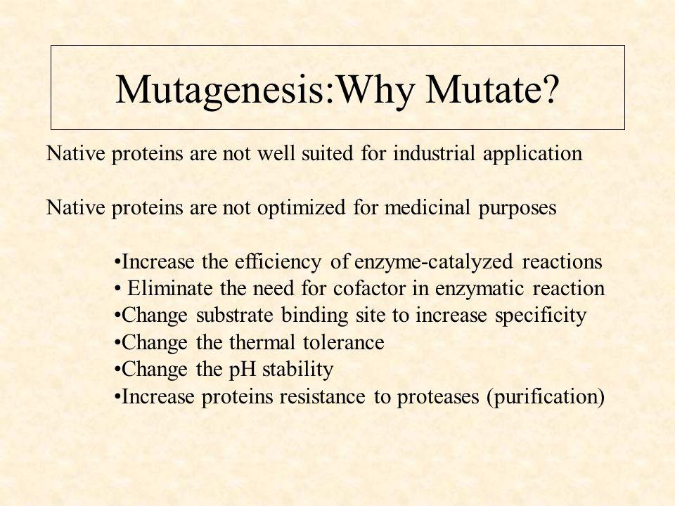 Mutagenesis:Why Mutate.