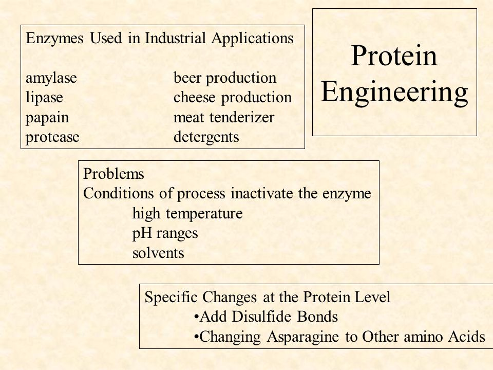 Protein Engineering Enzymes Used in Industrial Applications amylase beer production lipase cheese production papainmeat tenderizer protease detergents Problems Conditions of process inactivate the enzyme high temperature pH ranges solvents Specific Changes at the Protein Level Add Disulfide Bonds Changing Asparagine to Other amino Acids