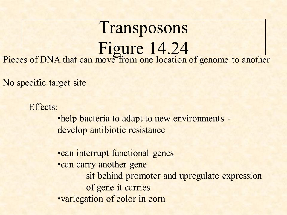 Transposons Figure 14.24 Pieces of DNA that can move from one location of genome to another No specific target site Effects: help bacteria to adapt to