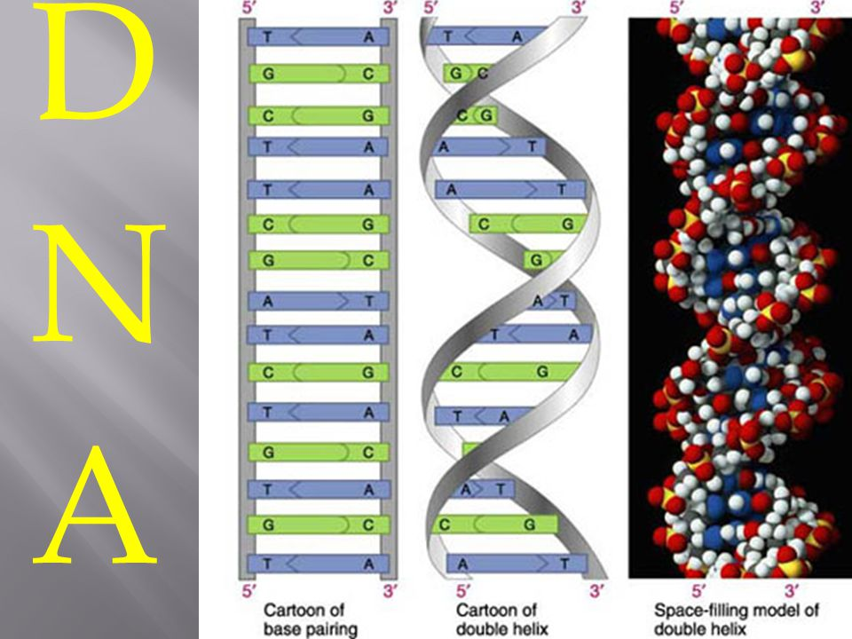 DNADNA