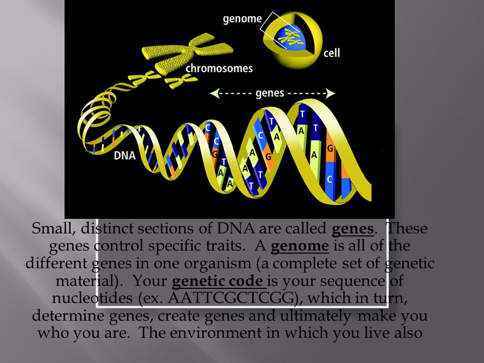 Small, distinct sections of DNA are called genes. These genes control specific traits.