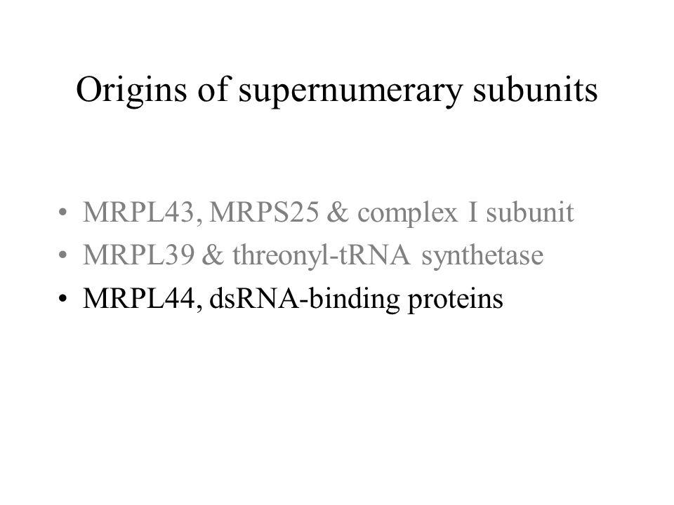 MRPL43, MRPS25 & complex I subunit MRPL39 & threonyl-tRNA synthetase MRPL44, dsRNA-binding proteins Origins of supernumerary subunits