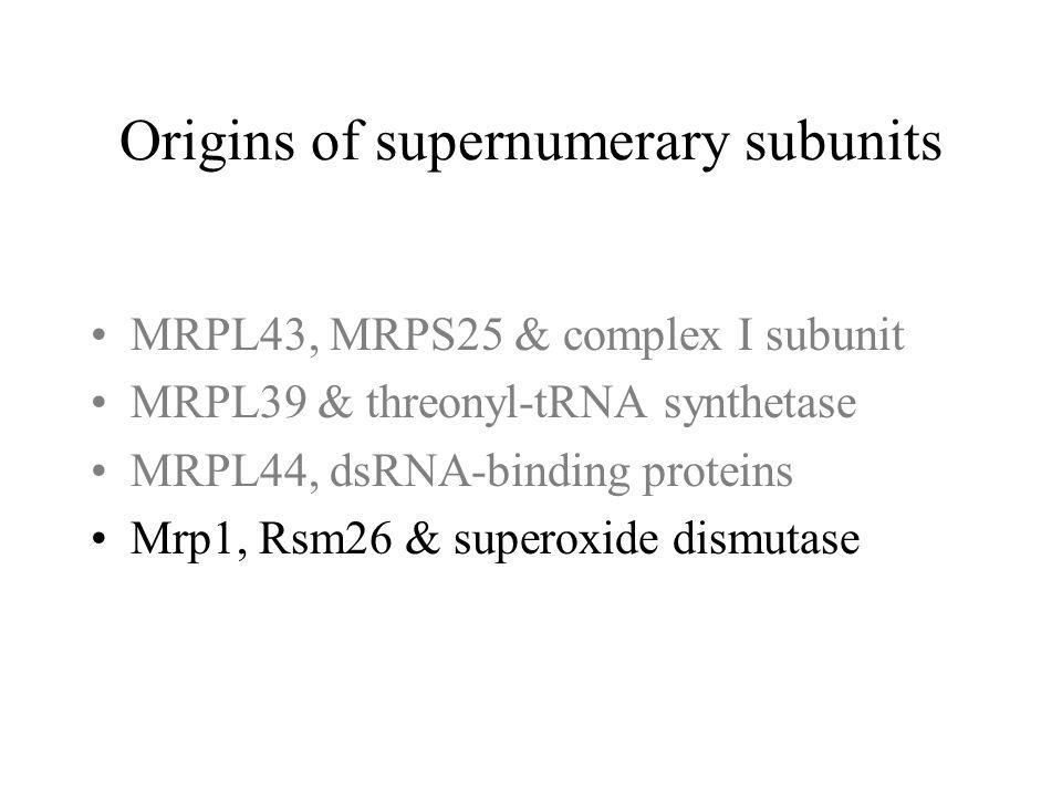 MRPL43, MRPS25 & complex I subunit MRPL39 & threonyl-tRNA synthetase MRPL44, dsRNA-binding proteins Mrp1, Rsm26 & superoxide dismutase
