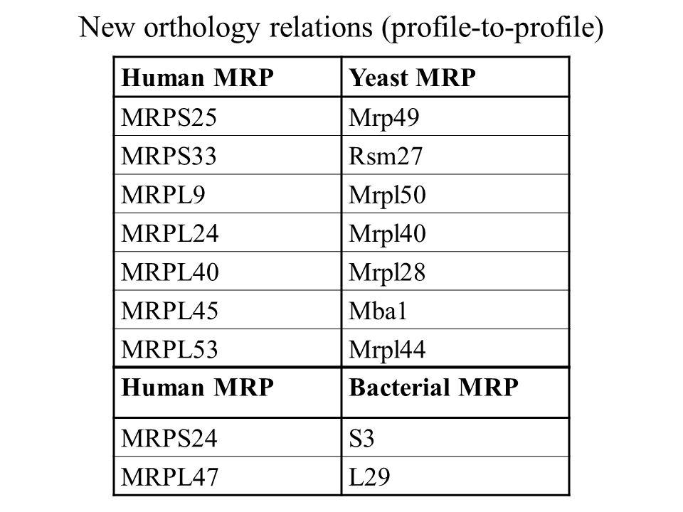 New orthology relations (profile-to-profile) Human MRPYeast MRP MRPS25Mrp49 MRPS33Rsm27 MRPL9Mrpl50 MRPL24Mrpl40 MRPL40Mrpl28 MRPL45Mba1 MRPL53Mrpl44 Human MRPBacterial MRP MRPS24S3 MRPL47L29